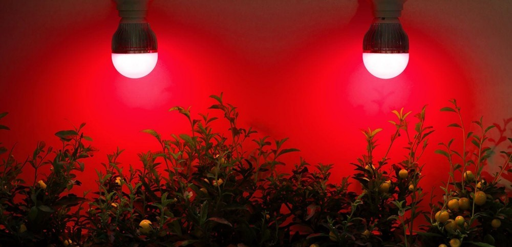 light therapy for plants