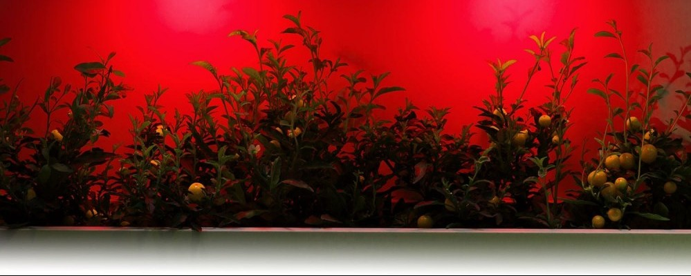led light on plants