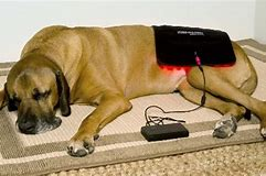 Can red light therapy be used on pets? At home or Vets!